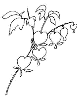1243 Hydrangea Paniculata Grandiflora additionally Cercis Occidentalis besides Perennials moreover NewPerennials 2003 furthermore Shade Plants For Austin Tx Zone 8. on shade flowers perennials